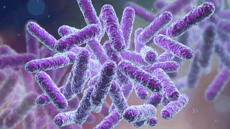 Si ndikon mikrobioma në sistemin tonë imunitar?
